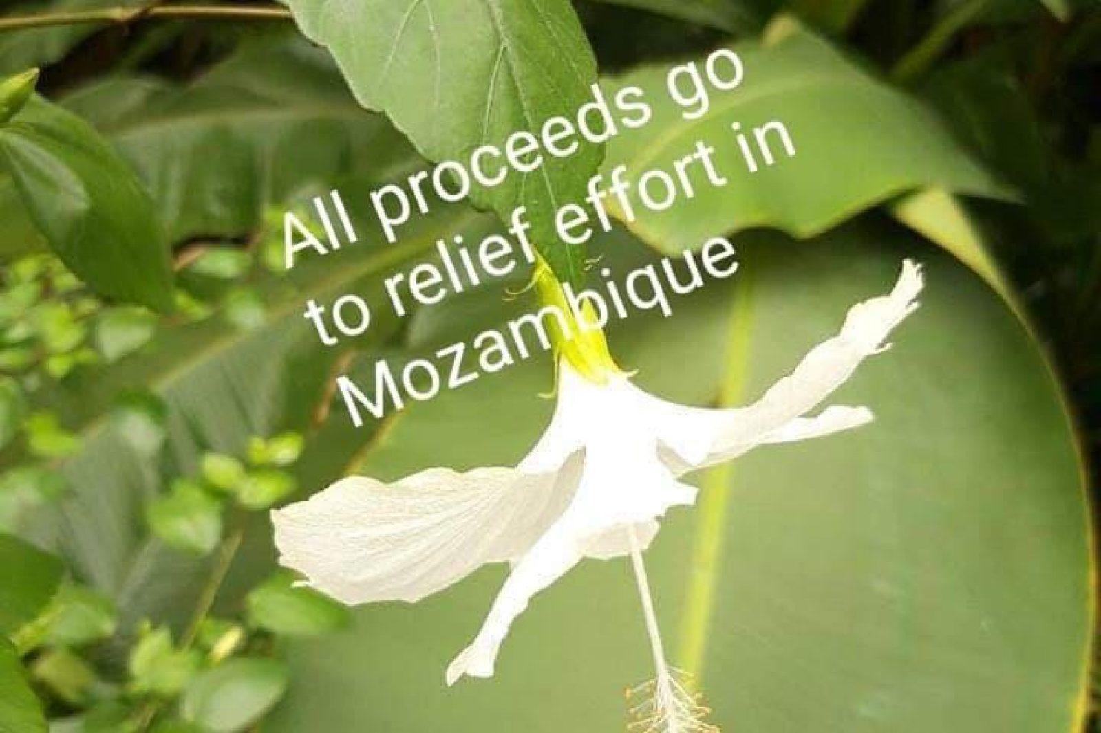 Mozambique6Th April