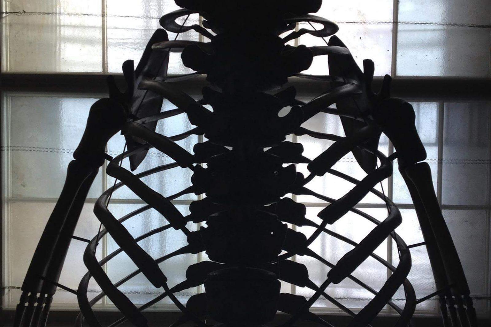 Skeleton Bw