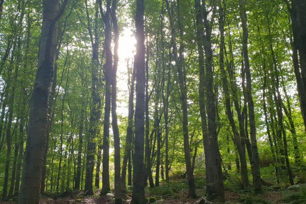 Sun And Trees Oc Dec 2021