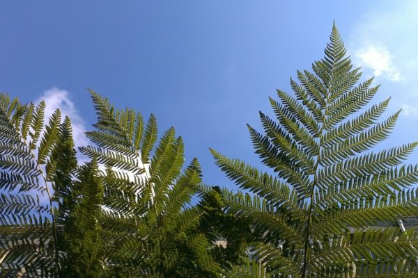 Ferns And Blue Sky Small