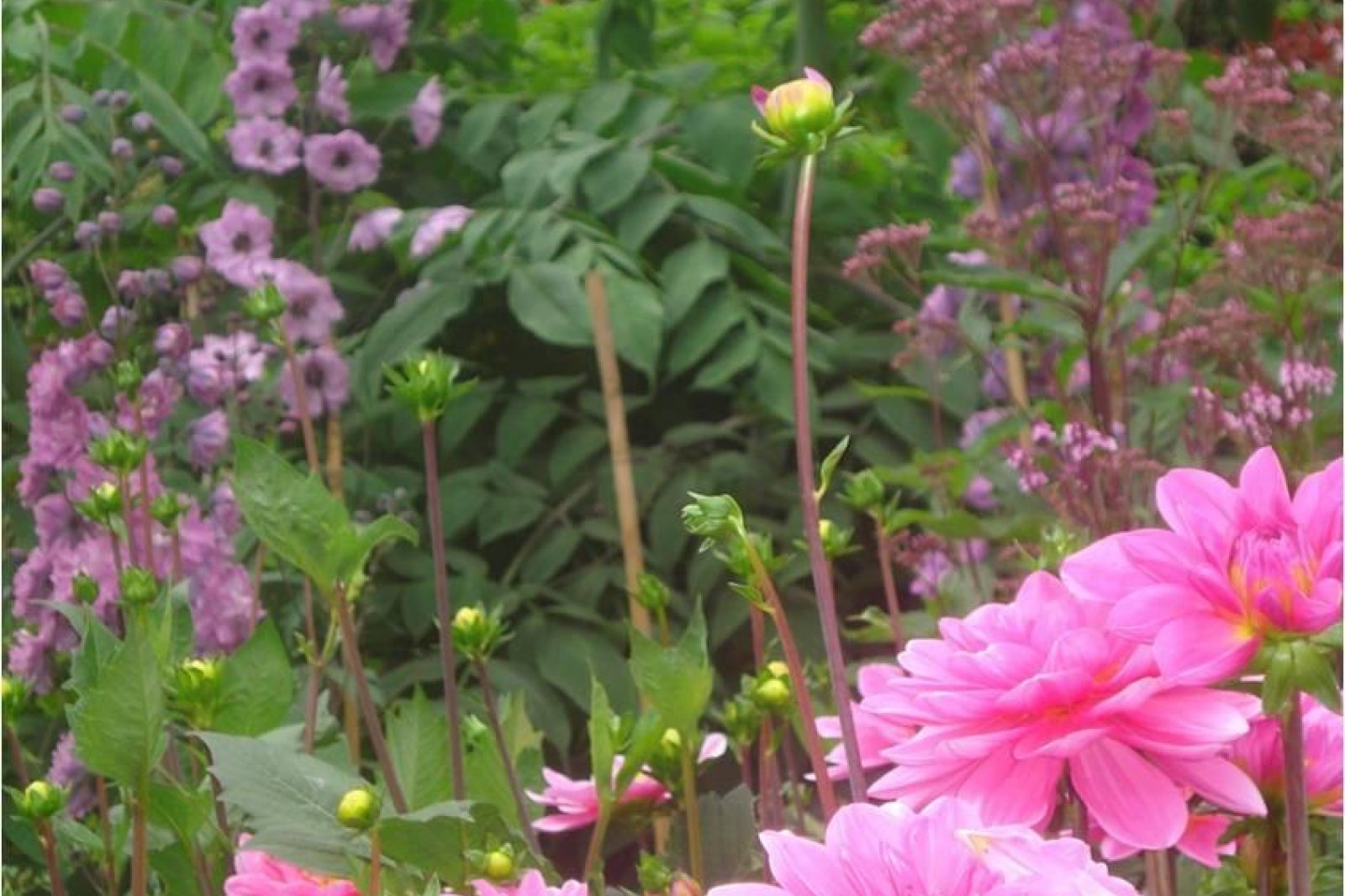 Mount Stewart Flowers