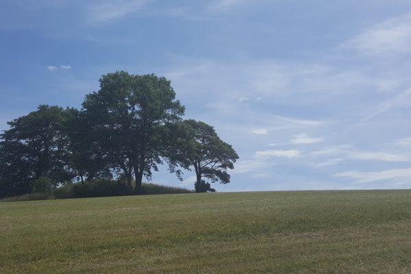 Treeisland Cr